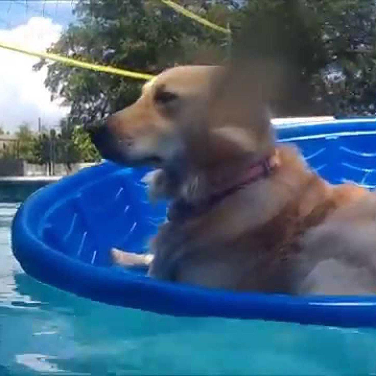 5 DIY Pool Floaties Your Dog Will Love | Family Handyman