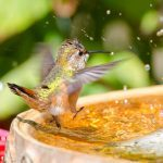 Beyond Feeders: 5 More Ways to Attract Hummingbirds