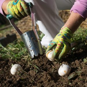 Plan Your Fall Bulb Planting Now