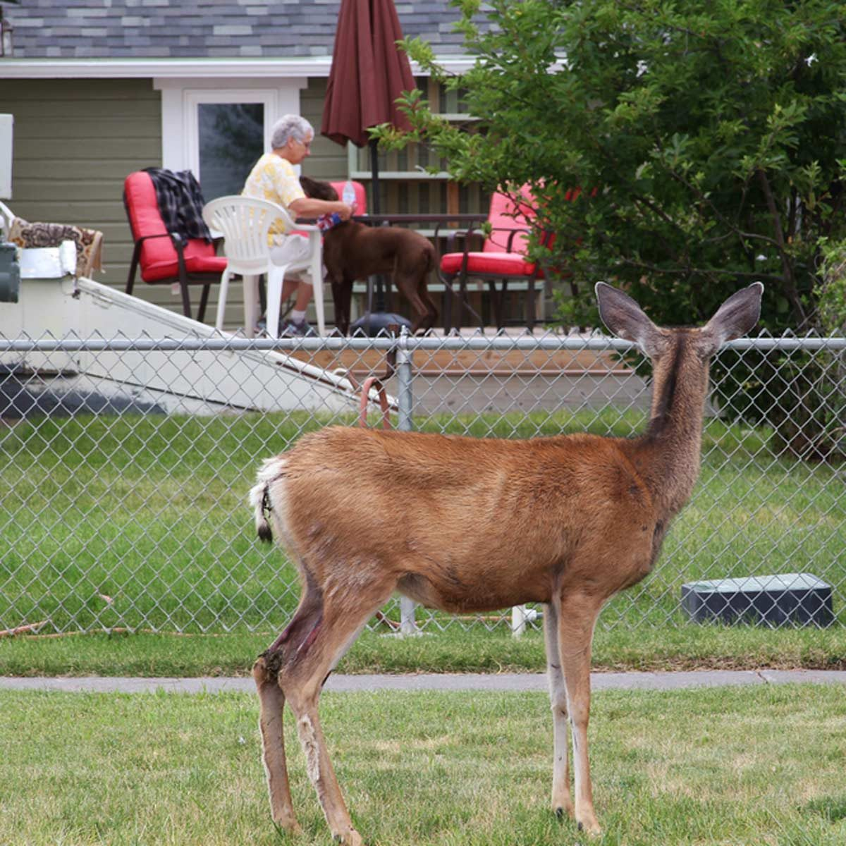 how to keep deer out of your yard | family handyman