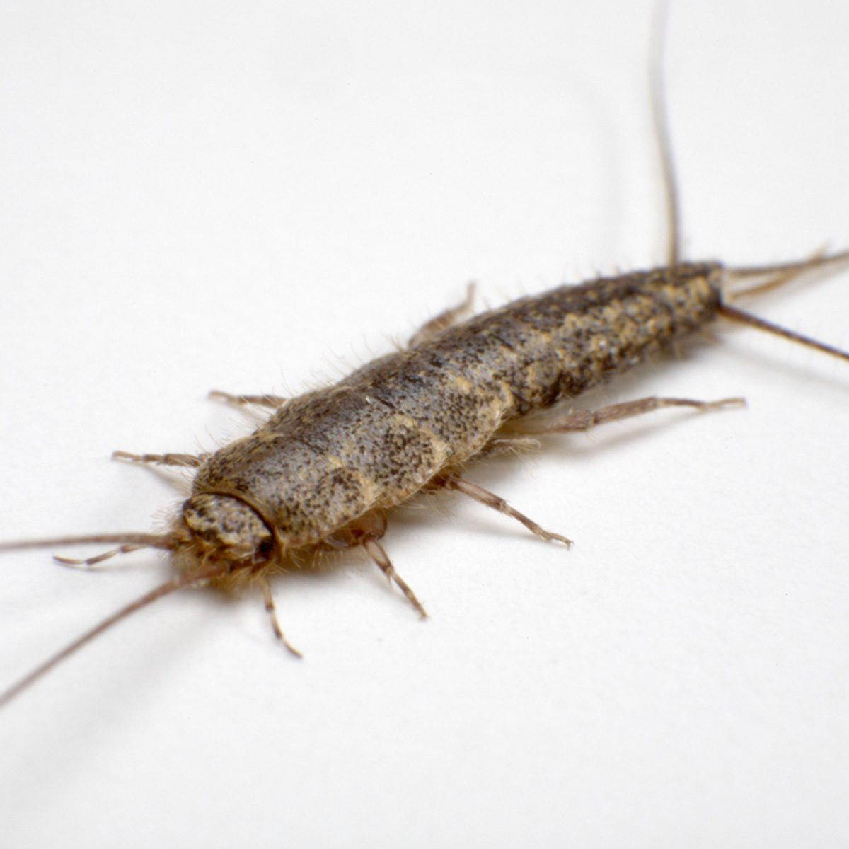 10 Things You Should Never Store In Your Basement Or Crawl