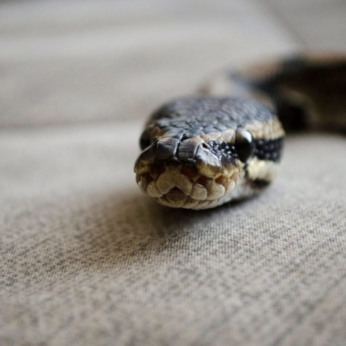 5 Frightening Ways Snakes Can Enter Your Home