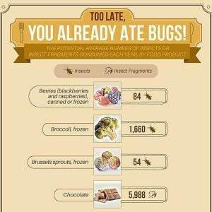 Yuck! Here's How Many Insects You're Eating Every Year