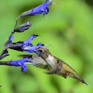 What Plants Do Hummingbirds Love Most?