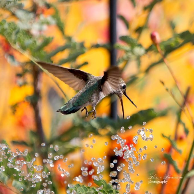 hummingbird bird bath fountains