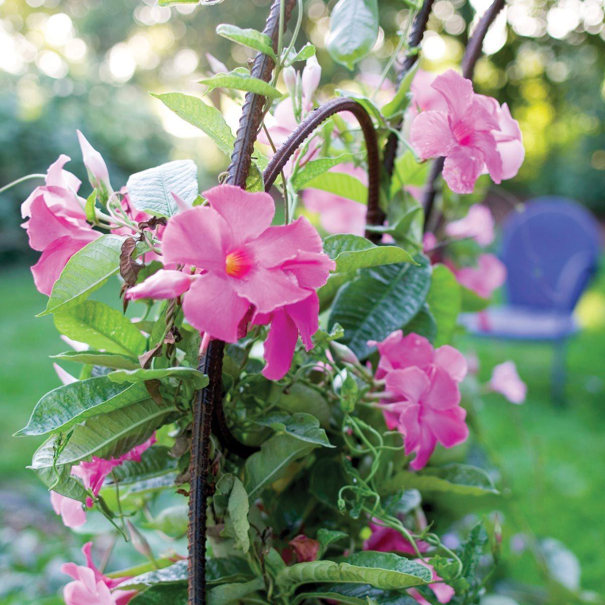 rebar garden arch trellis