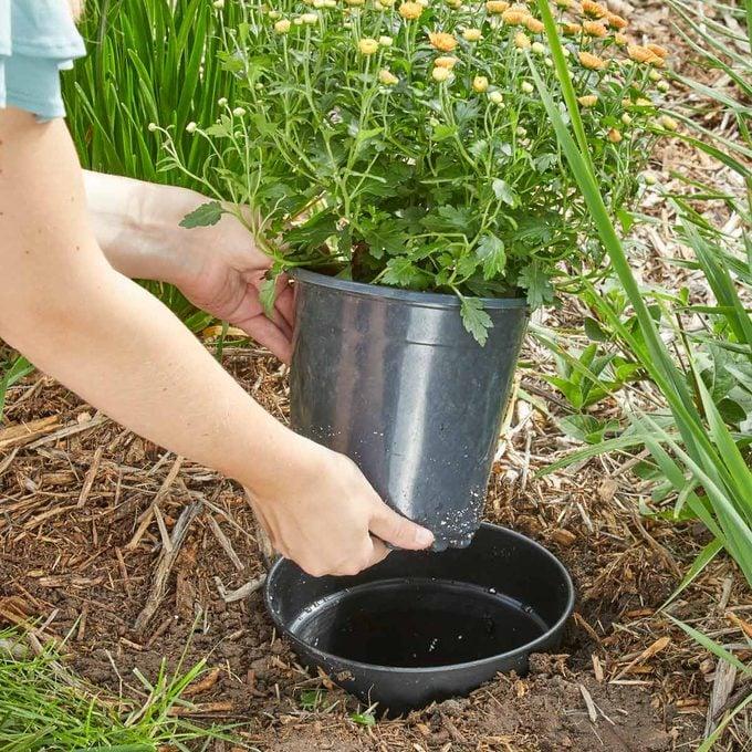 plant in a pot landscaping design seasonal mums HH Handy Hint landscape pots