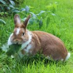 Keep Rabbits Away From Your Lawn with These Nifty Tricks