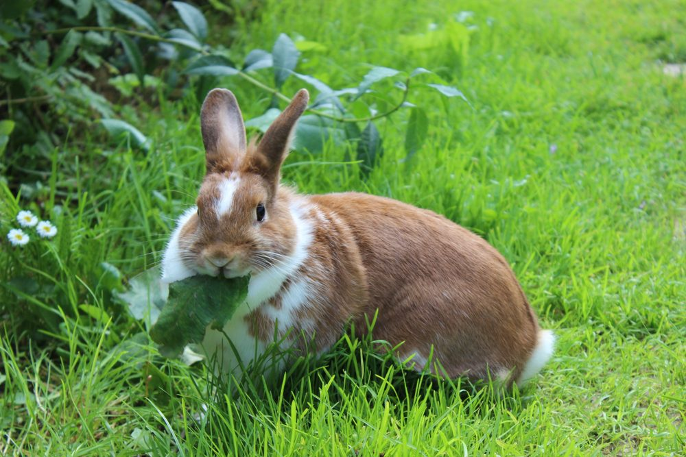 keep the plants clean - How To Keep Rabbits Out Of Garden