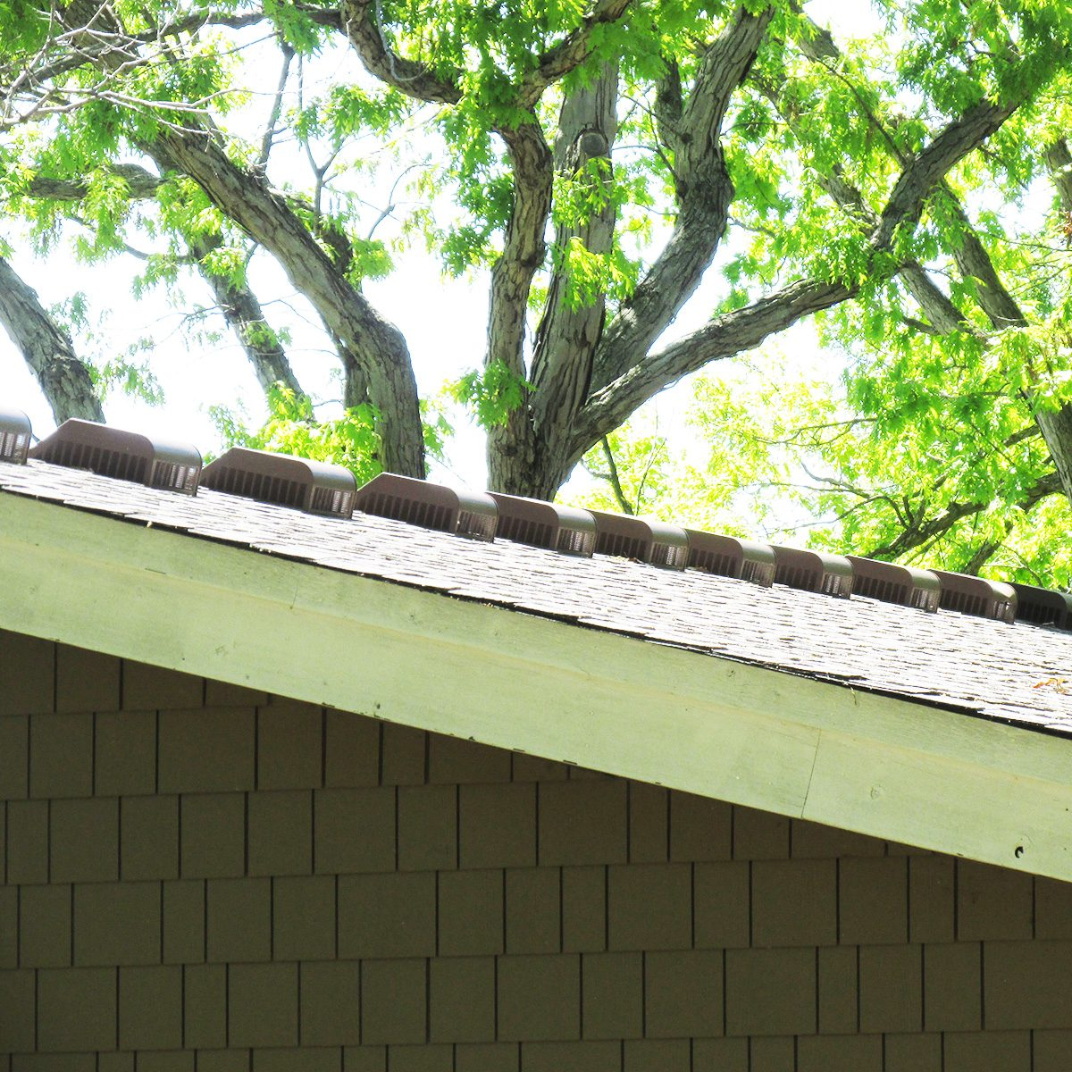 A line of roof vents | Construction Pro Tips