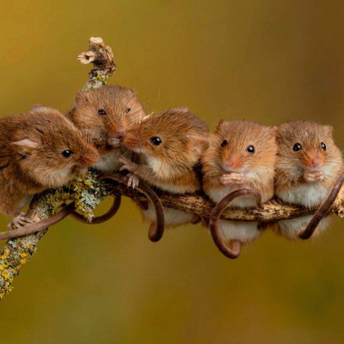 11 Things Mice Don T Want You To Know The Family Handyman