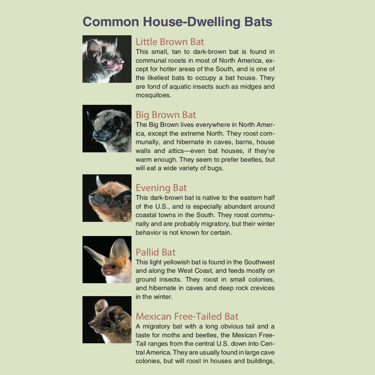 Bugs Beware Here Come The Bats Family Handyman Electrical Wiring How To Run Power Anywhere Still Not Convinced Are A Few More Facts About