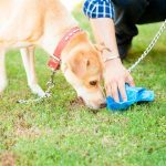 This Magical Spray Will Tell Your Dog Exactly Where to Poop