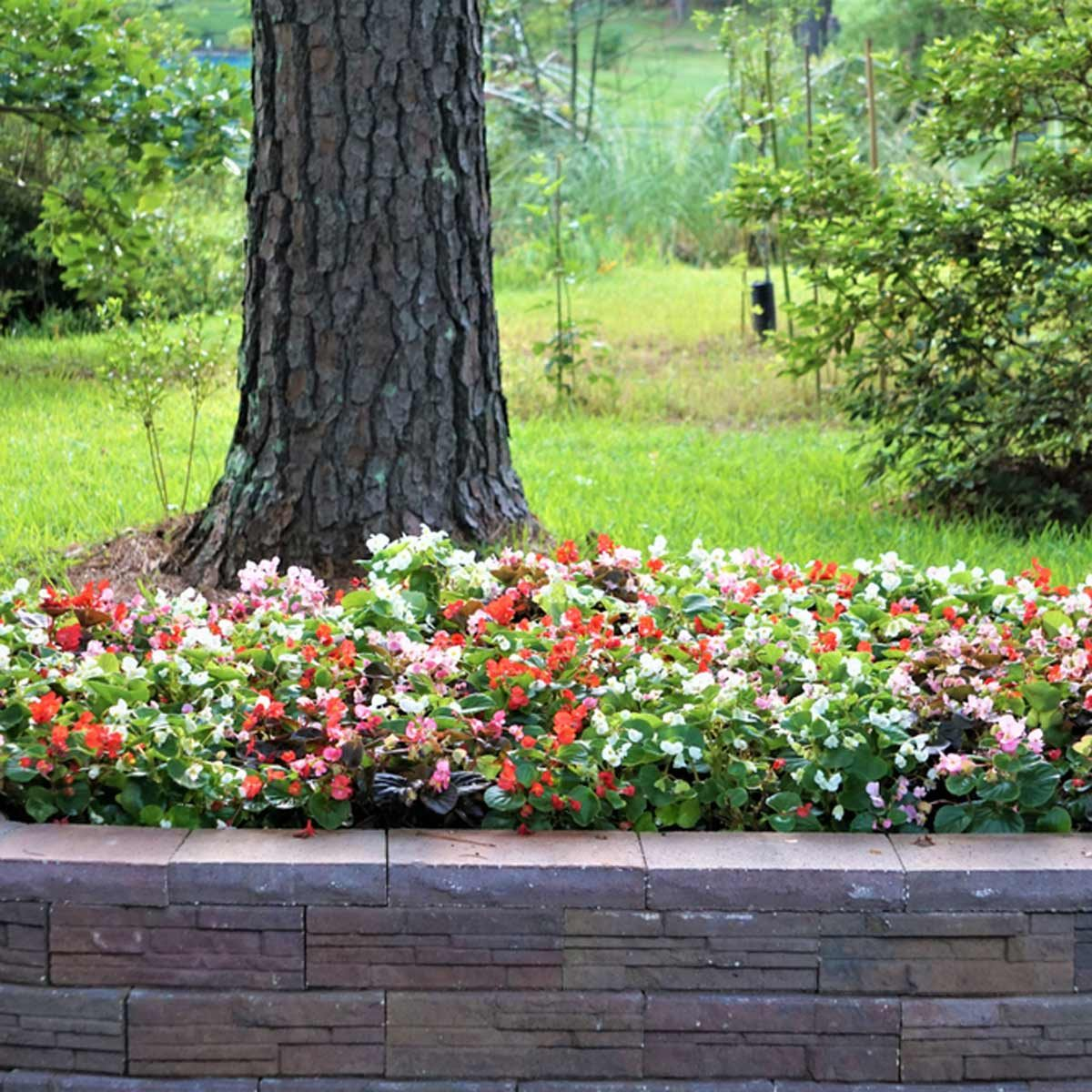 10 Tips For Landscaping Around Trees Family Handyman