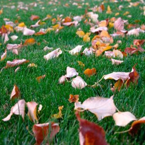 8 Fall Landscaping Myths You Need to Stop Believing