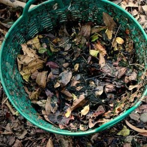 10 Things You Can Do With a Pile of Leaves