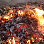 Here's Why Burning Leaves Is a Bad Idea