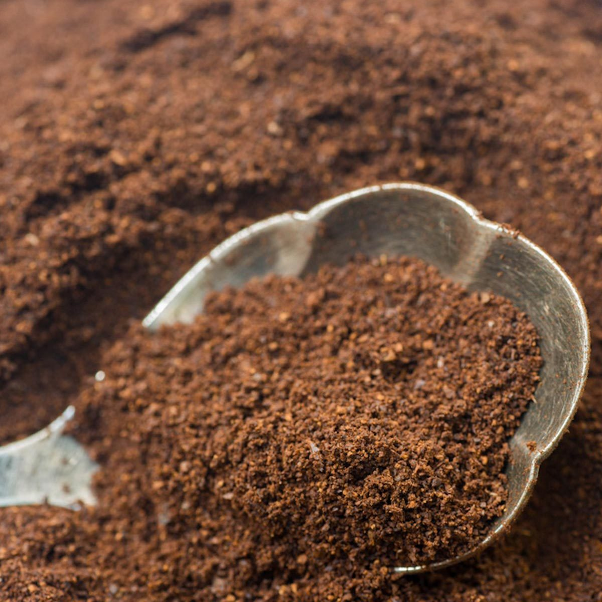 Are Whole Coffee Beans Cheaper Than Ground