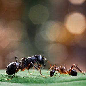 Here's How to Get Rid of Every Kind of Ant