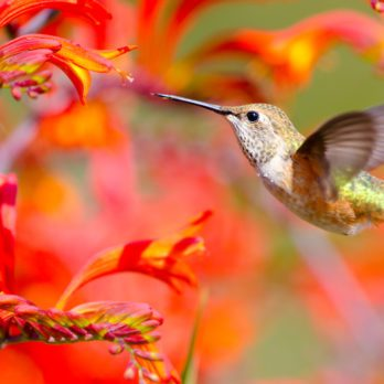 30 Plants to Attract Hummingbirds to Your Lawn