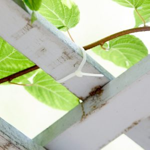 Control Your Climbing Plants with Zip Ties