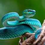 How to Avoid Snakes Slithering Up Your Toilet