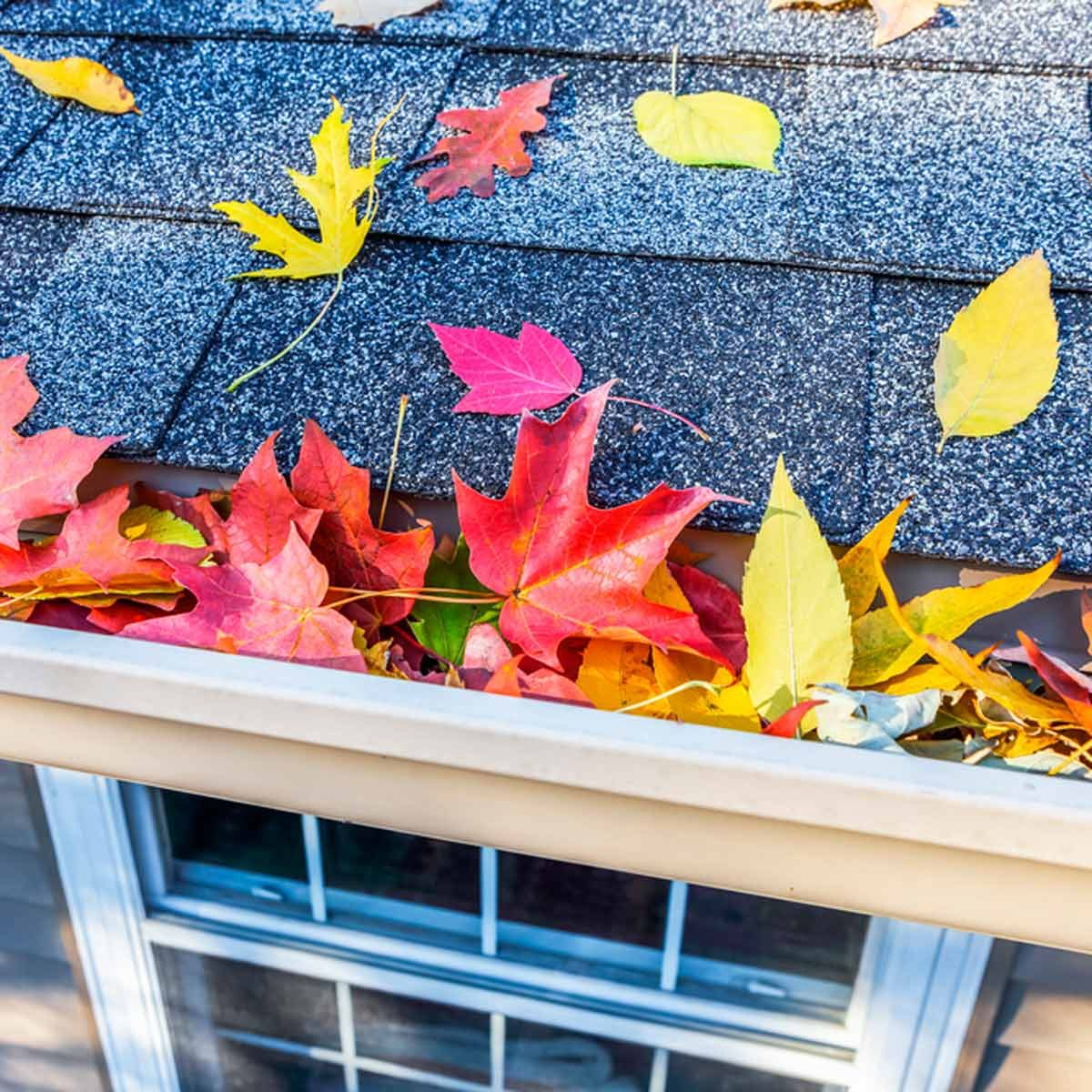 how to get your gutters ready for fall and winter