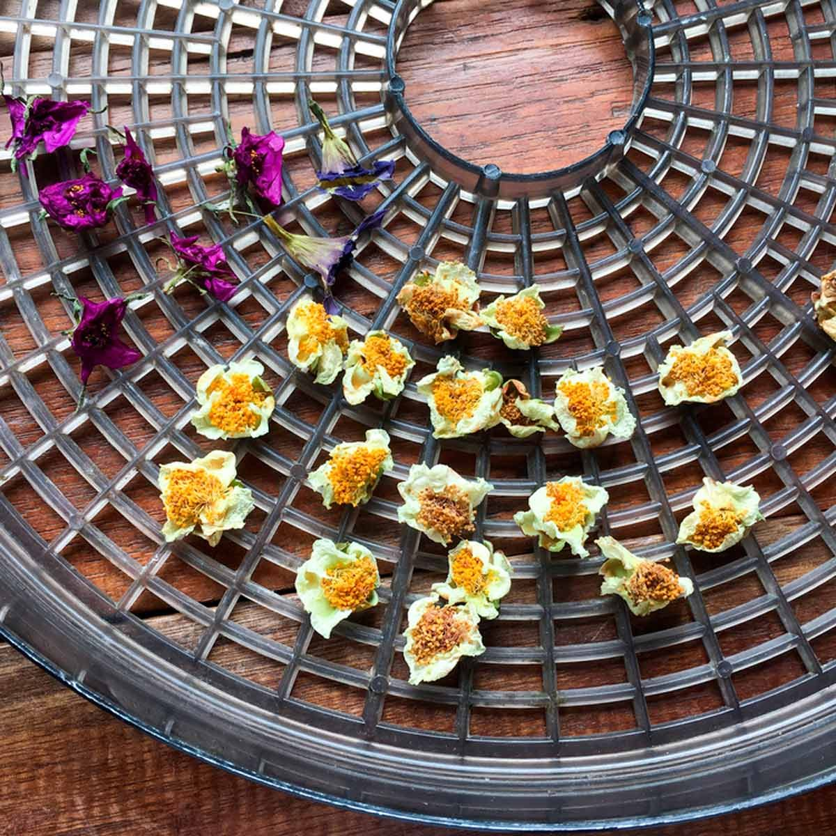 10 Unusual Ways To Use Your Food Dehydrator Family Handyman The Family Handyman