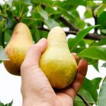 Do These 8 Things to Your Fruit Trees Before Winter