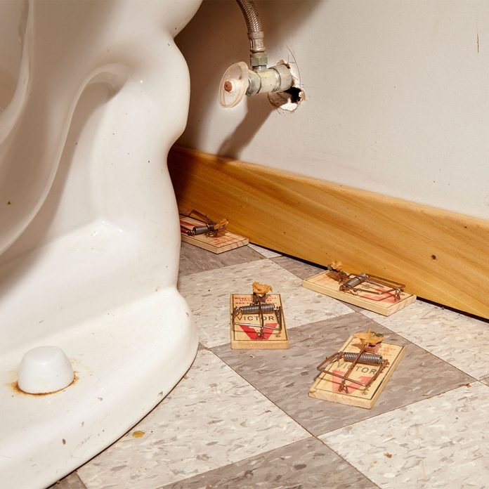 mousetraps by toilet