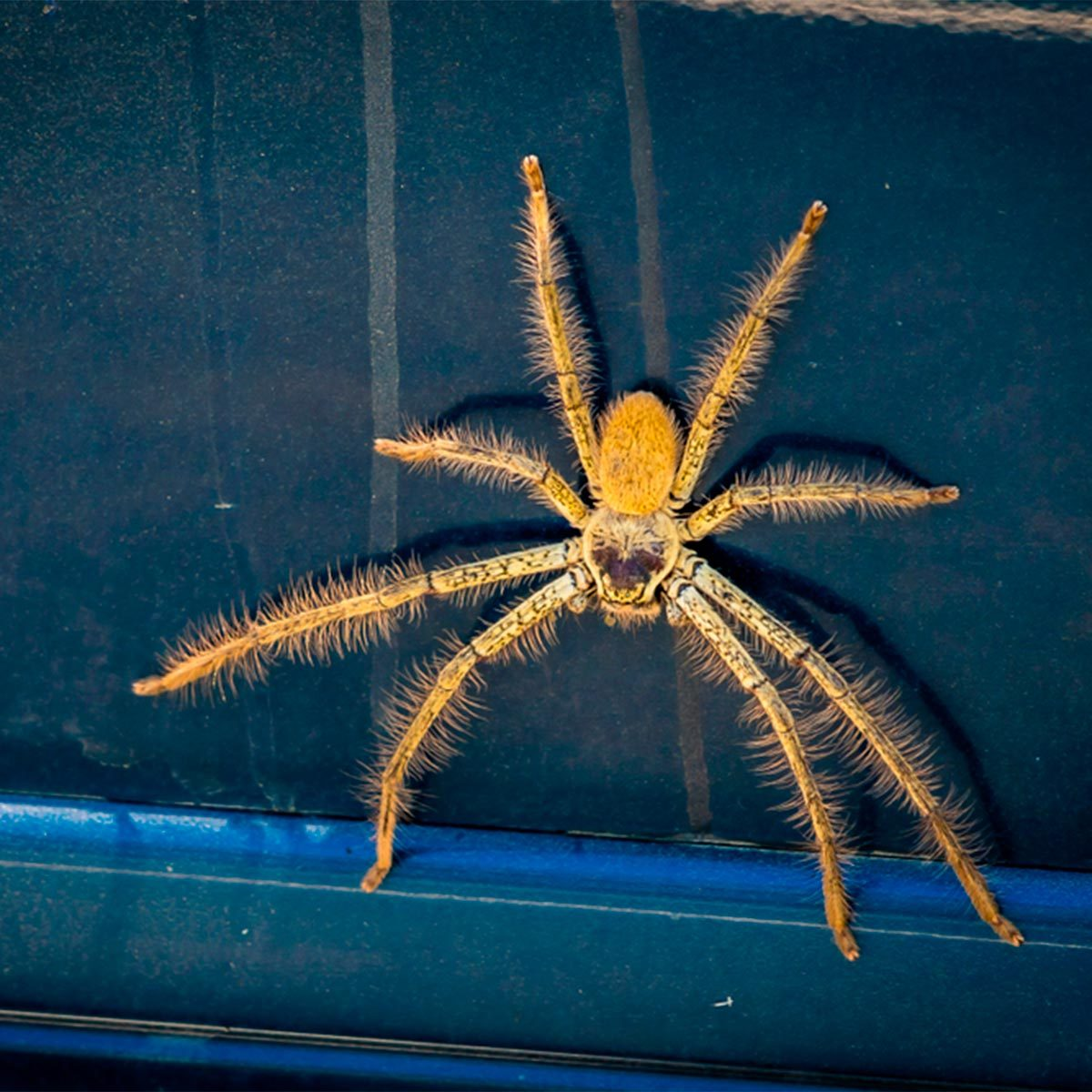 How To Quickly Get Rid Of Spiders In Your Car The Family