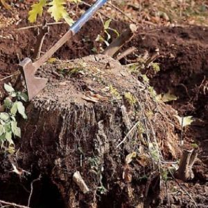 How to Remove a Tree Stump with a Grinder