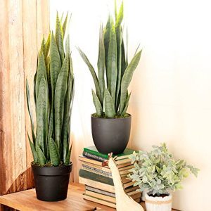 10 Attractive Houseplants You Literally Can't Kill