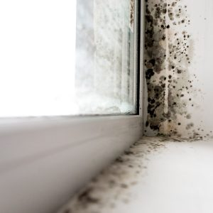 12 Hidden Signs Your House Could Have Toxic Mold