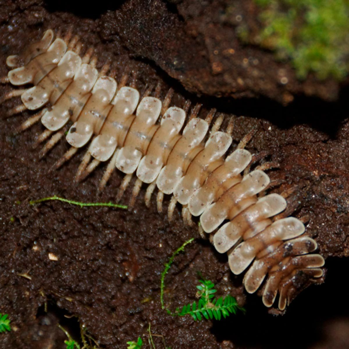 Millipede Vs Centipede And How To Keep Them Both Out Of