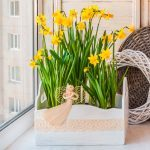 When to Plant Flower Bulbs Indoors so They Bloom During the Holidays