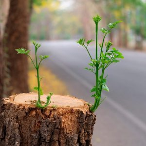 Remove a Tree Stump Yourself with This Common Household Product