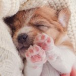 How to Minimize the Risk of Infections Spread by Pets