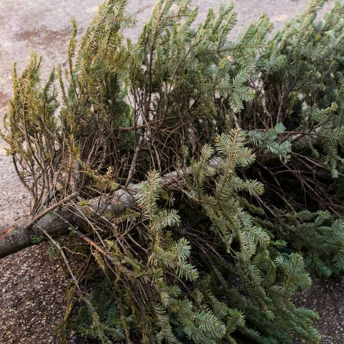 Don't burn your Christmas tree in a fireplace