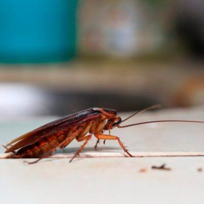 cockroach infestation