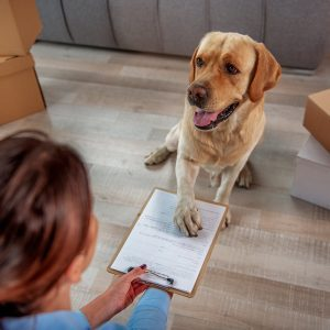 How to Make Your Move Less Stressful for Your Pet