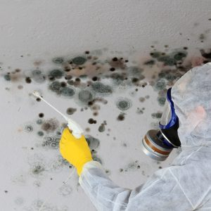 The Secret to Preventing Mold in Your Crawl Space