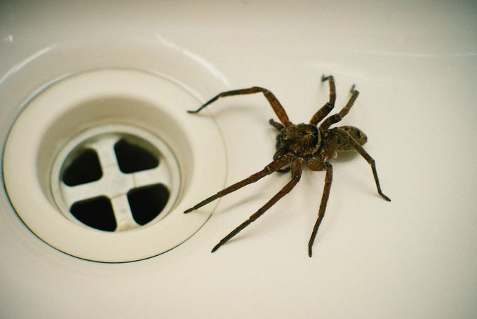 High Angle View Of Spider In Bathroom Sink
