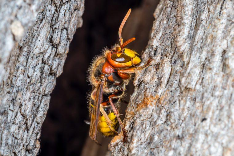 Hornets nest entrance