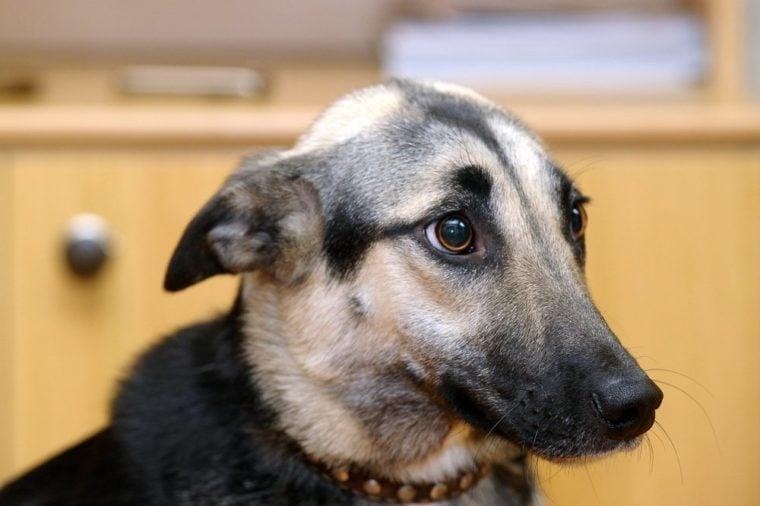 Cute Dog (dog, scared, frightened)