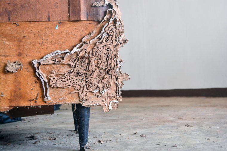 The Wood wardrobe with termite damage.termite damage. closeup wood wardrobe wite termite damage.