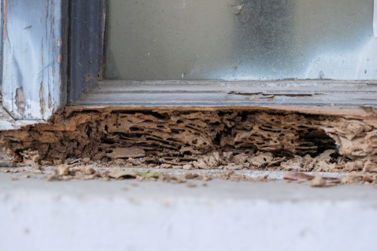 Window frame had been damaged by termites, Close up termite nest.