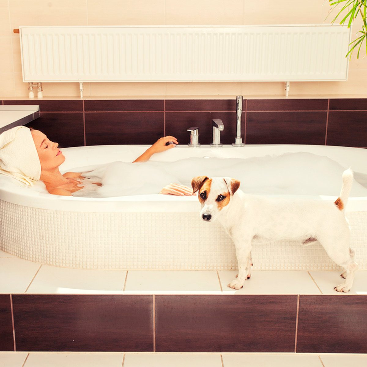 Why Does My Dog Follow Me Into The Bathroom The Family Handyman
