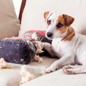 dog chewing up pillow