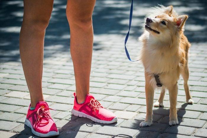 Big pomeranian spitz dog next to a girl in the street.